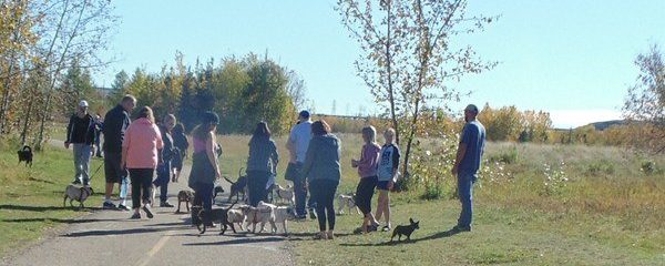 Welcome to the Edmonton Pug Club