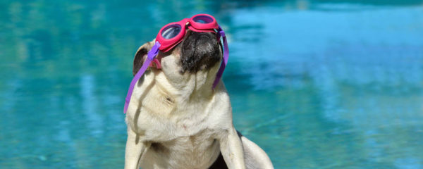 How To Keep Your Pug Cool This Summer